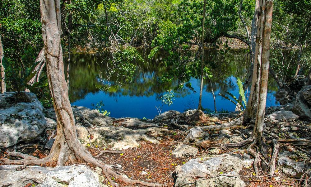 Cenote Escondido %    Of  %