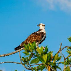 Discover Tulum's Fauna